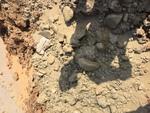 Soil-Bentonite Slurry Trench Cutoff Wall Image -- IMG_1313 by Jeffrey Evans